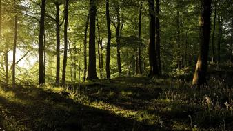 Trees england forest sunlight united kingdom panorama wallpaper