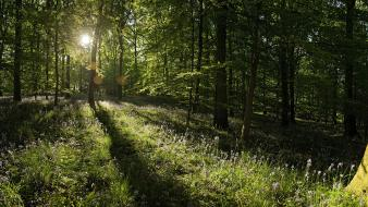 Trees forest sunlight panorama wildflowers Wallpaper