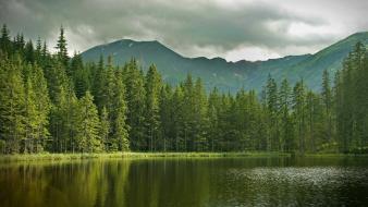 Water clouds nature trees forests lakes pine dupa Wallpaper
