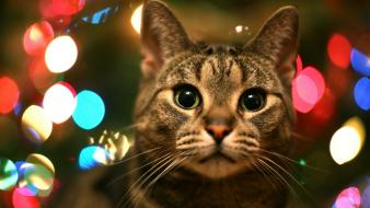 Winter cats animals christmas pets Wallpaper