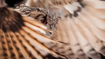 Close-up wings birds feathers owls wallpaper