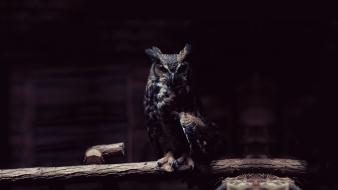 Dark birds owls wallpaper