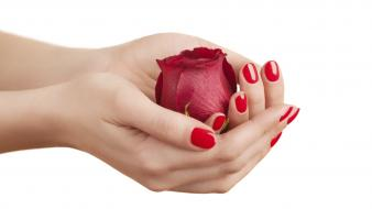 Hands roses white background wallpaper