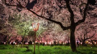 Japan shrine national geographic kyoto wallpaper