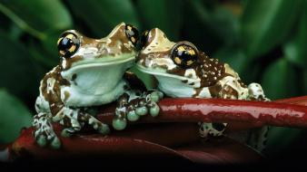 Jungle frogs toad wallpaper