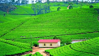 Landscapes nature tea travel plantation sri lanka wallpaper