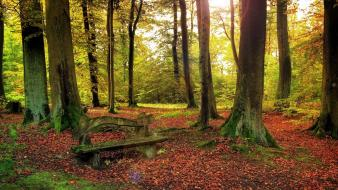Landscapes trees bench fallen leaves wallpaper