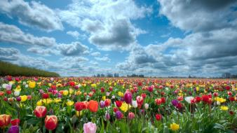 Landscapes tulips holland wallpaper
