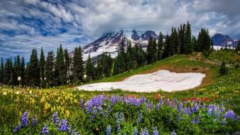 National park mount rainier wildflowers washington state wallpaper