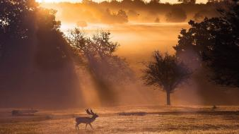 Nature fields mist deer wallpaper