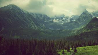 Nature trees pine photo filters tatra tatry wallpaper
