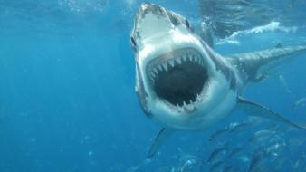Ocean sharks predators teeth wallpaper