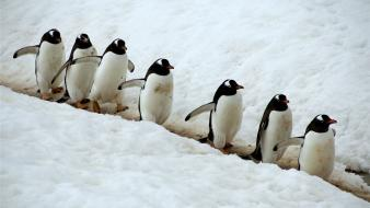 Snow animals penguins wallpaper
