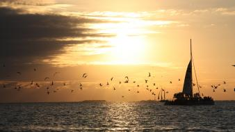 Sunset boats florida key west birds wallpaper
