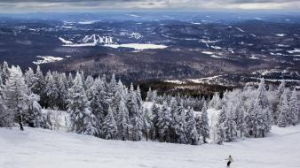 Winter snow trees white forests cold skiing wallpaper