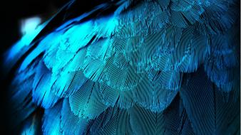 Blue feathers wallpaper