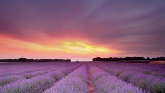 Clouds landscapes fields lavender wallpaper