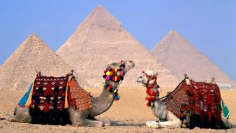 Egypt camels wallpaper
