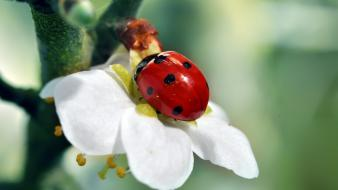 Flowers insects ladybirds wallpaper