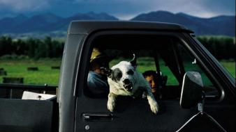 Landscapes dogs trucks national geographic wallpaper