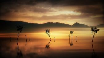 Landscapes nature trees silhouette mist Wallpaper