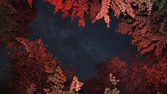 Landscapes trees night stars forest wallpaper