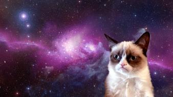 Manipulations grumpy cat wallpaper