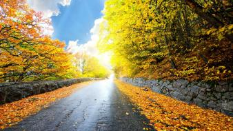 Nature autumn (season) streets yellow leaves seasons colors Wallpaper