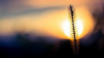 Nature sun silhouette plants bokeh macro blurred background Wallpaper