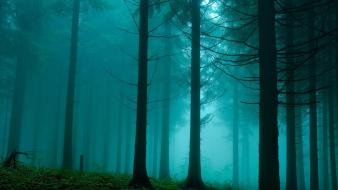 Nature trees wood fog gloomy wallpaper