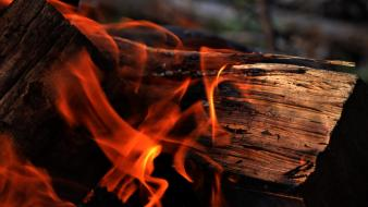 Red wood fire backgrounds bonfire woodlands burning Wallpaper