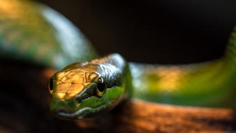 Snakes snake eyes wallpaper