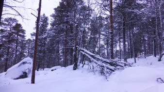 Snow forest nordic wallpaper