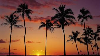 Sunset nature palm trees wallpaper