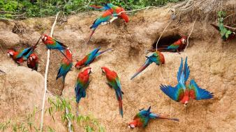 Animals parrots birds wallpaper
