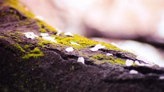 Close-up nature moss macro depth of field wallpaper