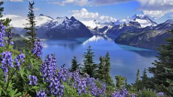 Columbia lakes parks purple flowers lake garibaldi wallpaper
