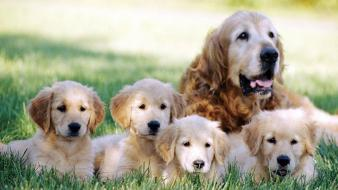 Family animals dogs puppies wallpaper
