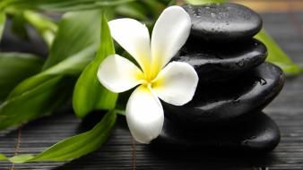 Flowers leaves stones plumeria Wallpaper