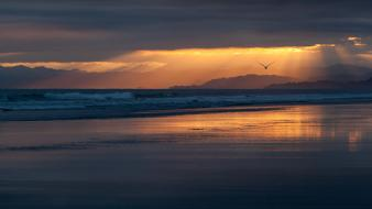 Landscapes birds sunlight waterscapes beach wallpaper