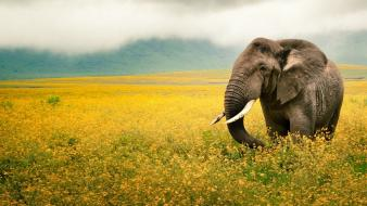 Landscapes nature animals national geographic wallpaper