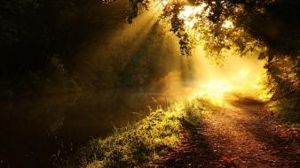 Light landscapes nature sun glow morning branches beams wallpaper