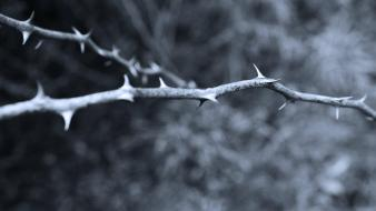 Monochrome branches thorns wallpaper