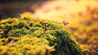 Mushrooms moss flora warm colors wallpaper