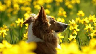 Nature animals dogs wallpaper