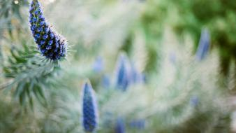 Nature flowers plants depth of field blue wallpaper