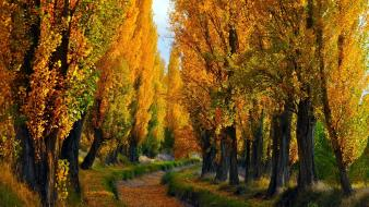 Nature trees path autumn wallpaper