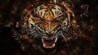 Predator animals tigers shattered wallpaper