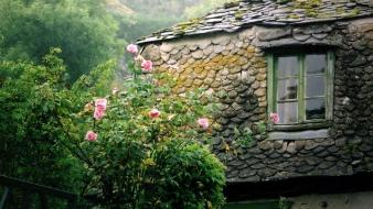 Trees moss villages roses old house windows wallpaper