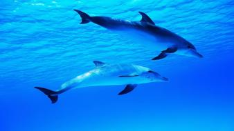Water animals dolphins wallpaper